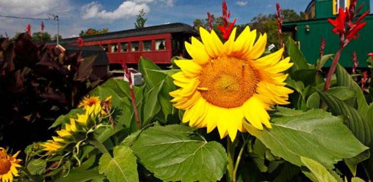 Sunflowers growing in front of the train station inn